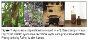 Figure 1. Ayahuasca preparation (from right to left): Banisteriopsis caapi; Psychotria viridis; ayahuasca decoction; ayahuasca prepared and bottled. Photographs by Rafael G. dos Santos.
